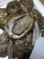 氷見の岩牡蠣1