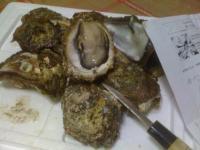 氷見の岩牡蠣2